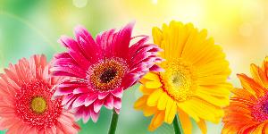 ooz-kamnik-cvetlicarji
